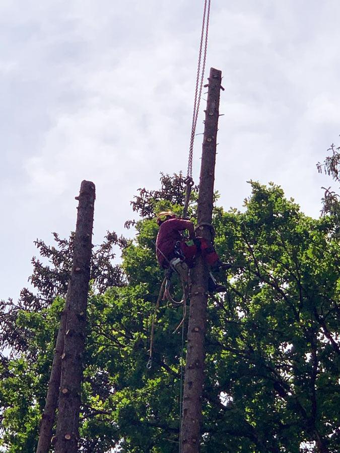 Baumfällung Wolfratshausen